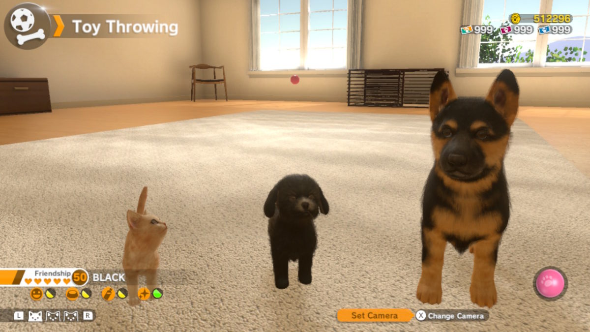 Review Little Friends Dogs Cats Une Simulation De Vie Qui Manque De Profondeur Nintendo Switch Fan